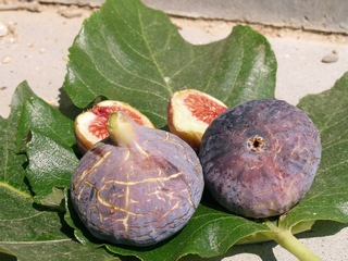 First figs from a scion of Cala D'or. 9 septembre 2007.<br>