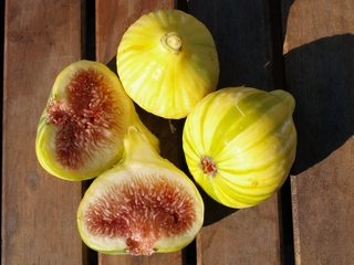 Figs of mine roof 6 September 2007